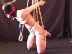 Cat hanging slave