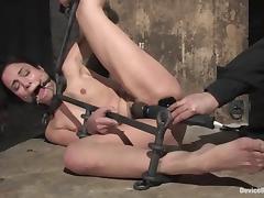 Lovely Amer Rayne gets her wet pussy stuffed in bondage video